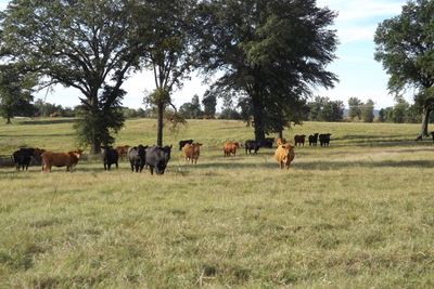Hanna 320 Acre Ranch-SKB
