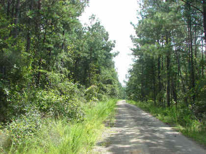 Pushmataha Timber & Hunting Land - rdb